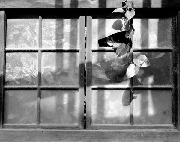 Houbi  Tainan  2005, Platinum Palladium Print ©Naohisa Hara