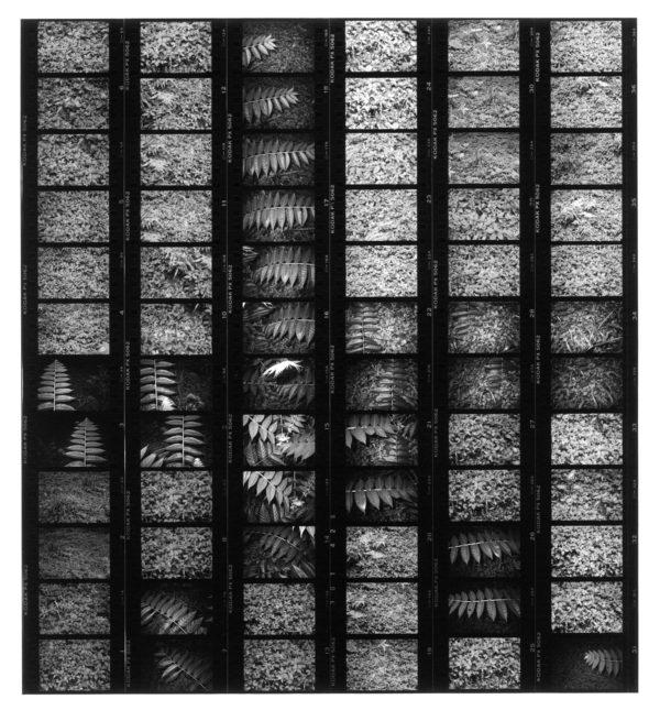 85006, 1985, gelatin silver print : 1991, 11x14 in ©Yoshihiko Ito
