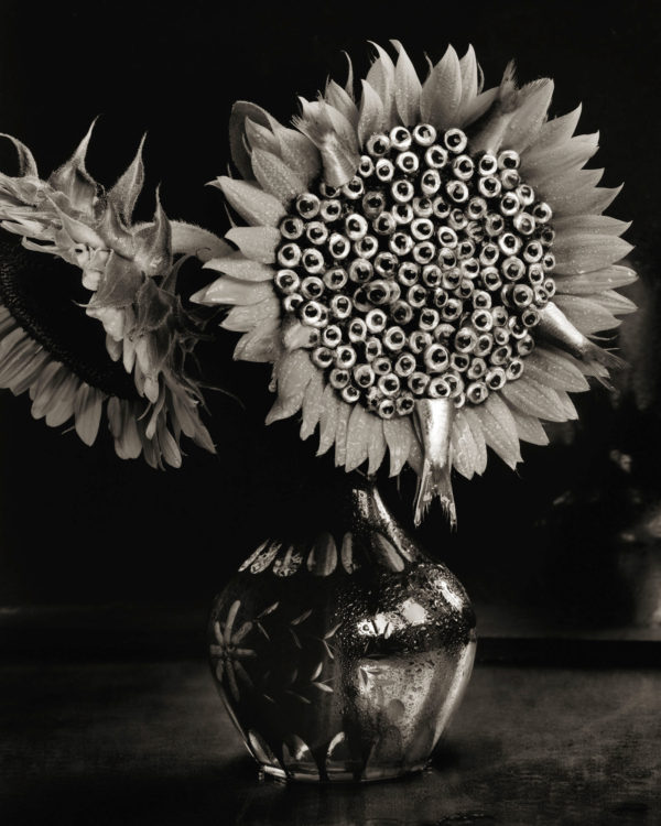 Sunflowers and Sardines  1990, platinum palladium print, edition of 7, 16x20 in ©Michiko Kon