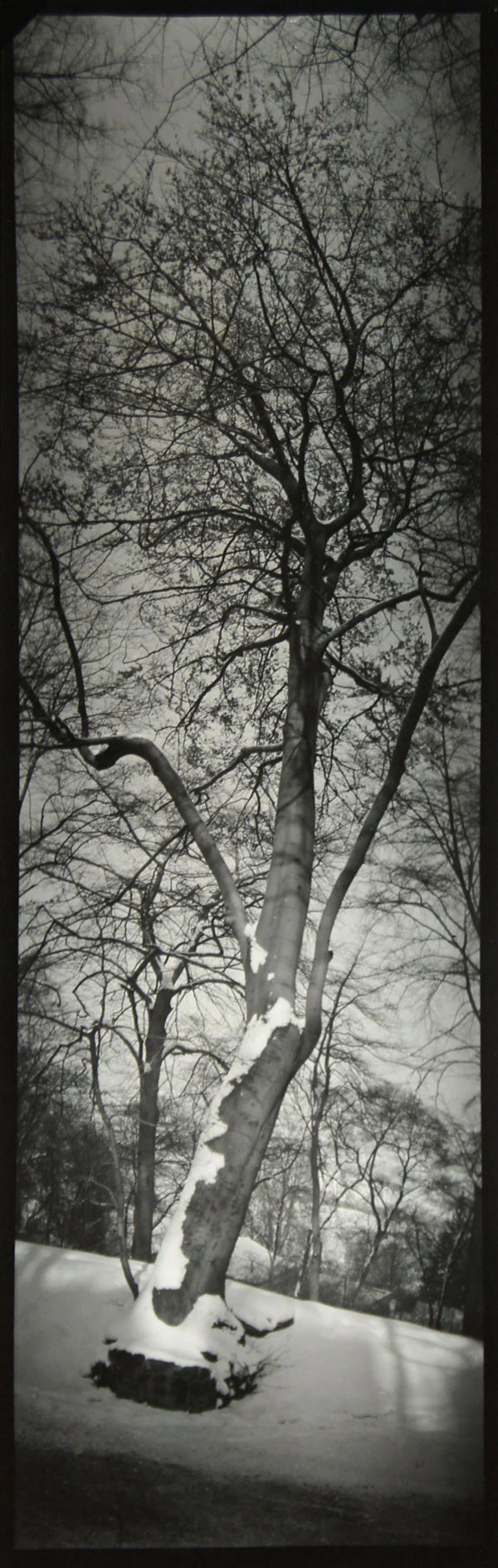 Panorama of Tree, n.d., gelatin silver print, 401 x 149 mm, ©Josef Sudek