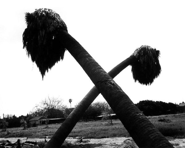Dead Palms, Partially Uprooted, Ontario, 1983, gelatin silver print:1988, 11 x 14 in, ©Robert Adams