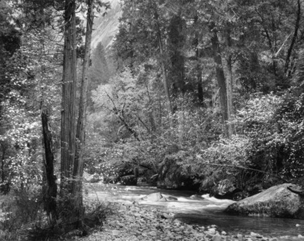 "Tenaya Creek, Dogwood, Rain, c.1948, gelatin silver print, 8 x 10"" on 14 x 17"" mat, ©The Ansel Adams Publishing Rights Trust"