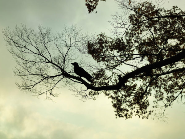 Crow, chromogenic color print:2015, edition of 7, 20 x 24 in ©Hiroyuki Takenouchi