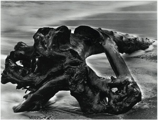 Driftwood Tree Trunk  1951, gelatin silver print, 7 1/2 x 9 1/2 in ©Bullock Family Photography LLC