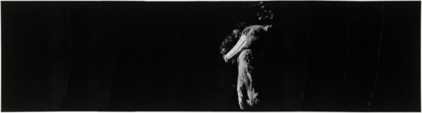 Shoebill・IX  2008, gelatin silver print on watercolor paper with glue, 160×565mm limited edition #1/1 ©Yoshihiko Ito