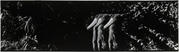 Shoebill・XI  2008, gelatin silver print on watercolor paper with glue, 115×405mm limited edition #1/1 ©Yoshihiko Ito