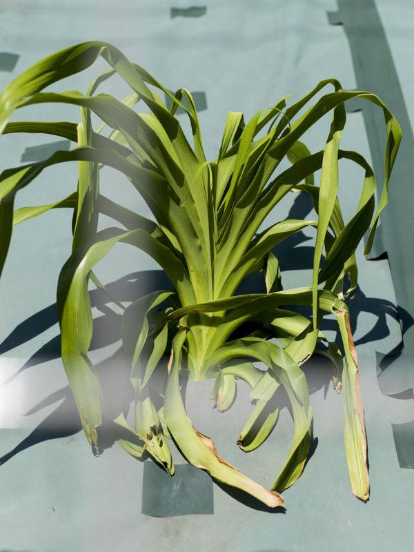 003, archival pigment print:2017, ed of 7,  594 x 420 mm ©Hiroyuki Takenouchi