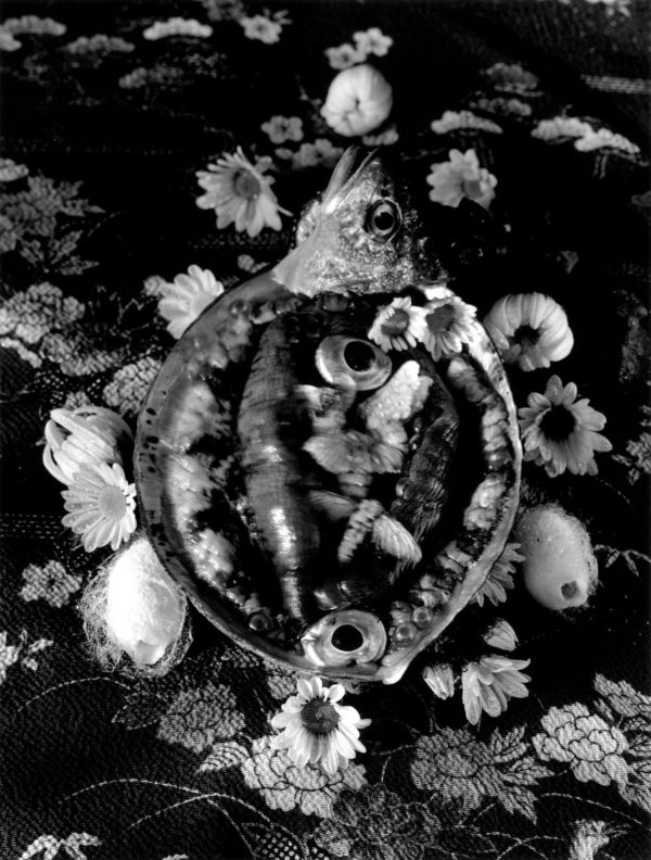 Silkmoths and live abalone,   gelatin silver print:2018,   16x20 in,   limited edition of 15,   ©Michiko Kon