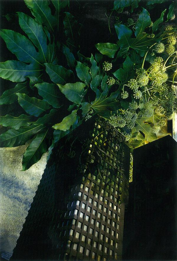 The Plants Architecture  1979,   Archival Pigment Print:2017,   limited edition of 5,   420x594mm,   ©Kikuji Kawada