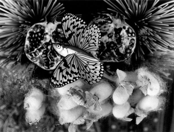 Flightless silk moths,   gelatin silver print:2018,   16x20 in,   limited edition of 15,   ©Michiko Kon