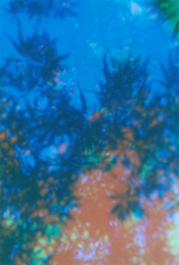 Cine Still Film 800,   Chromogenic Print,   limited edition of 5,   11 x 14 in   ©Yuji Hamada