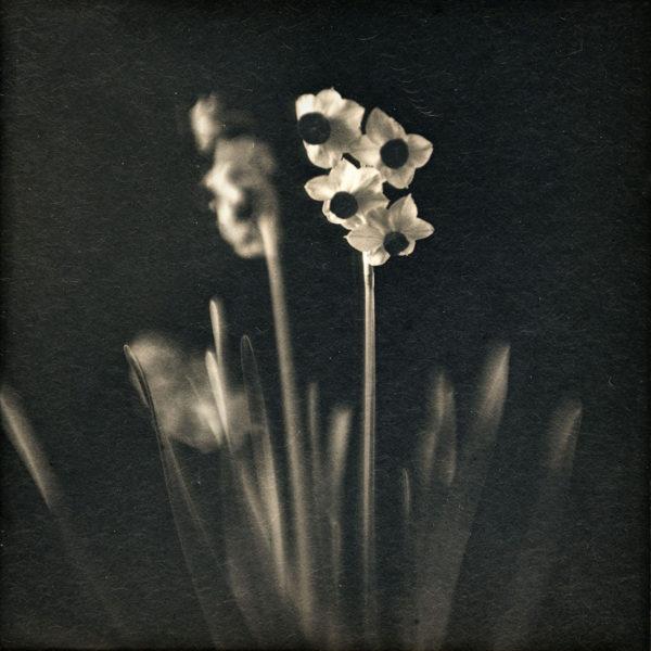 2013年2月1日 水仙,  ダゲレオタイプ,   unique,   6.3 x 6.3 cm ©Takashi Arai