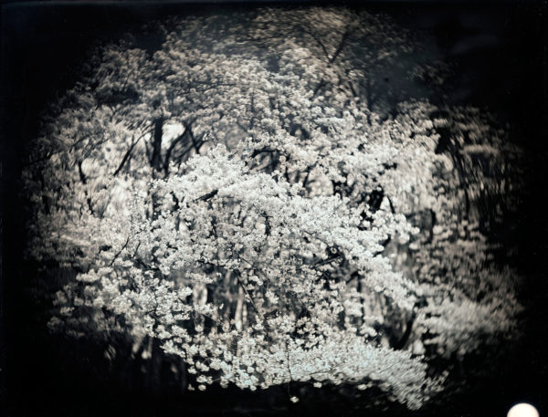 2011年4月10日  東京世田谷, ダゲレオタイプ, unique, 19.3 x 25.2 cm ©Takashi Arai
