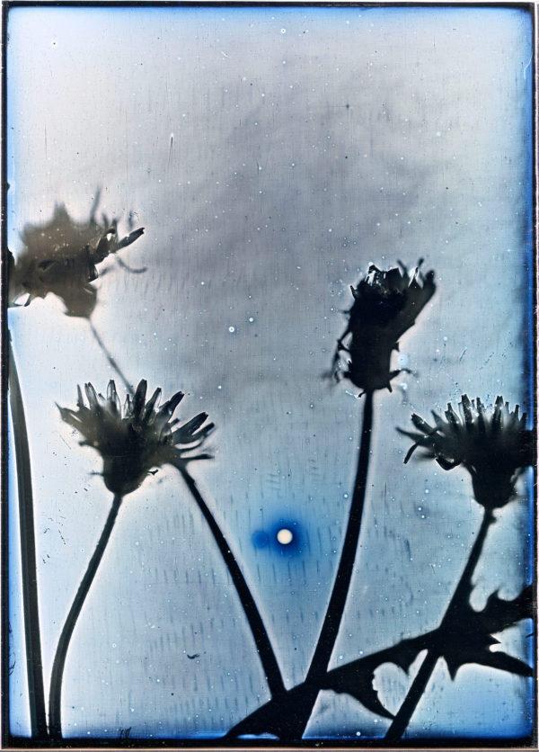 2014年3月16日に太陽とタンポポの陽画  長崎市金比羅山公園, ダゲレオタイプ, unique, 16.5 x 11.9 cm ©Takashi Arai