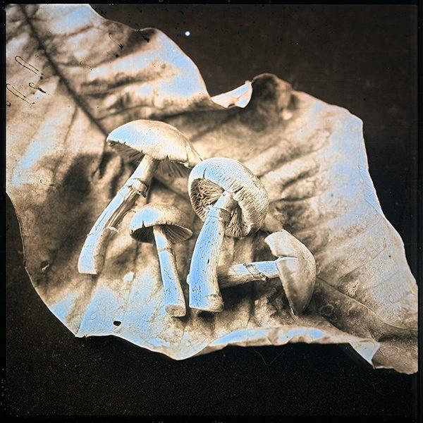 2012年10月27日 きのこ,  ダゲレオタイプ,  unique,  6.3 x 6.3 cm  ©Takashi Arai