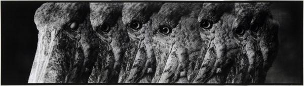 ハシビロコウ・I  2008, Gelatin silver print on watercolor paper with glue, 160×565mm, limited edition #1/1 ©Yoshihiko Ito