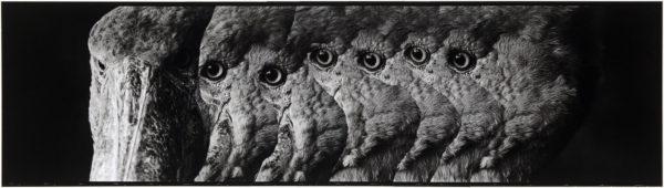 ハシビロコウ・II  2008, Gelatin silver print on watercolor paper with glue, 160×565mm, limited edition #1/1 ©Yoshihiko Ito