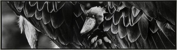 ハシビロコウ・VIII b  2008, Gelatin silver print on watercolor paper with glue, 160×565mm, limited edition #1/1 ©Yoshihiko Ito