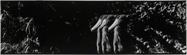 ハシビロコウ・XI  2008, Gelatin silver print on watercolor paper with glue, 115×405mm, limited edition #1/1 ©Yoshihiko Ito