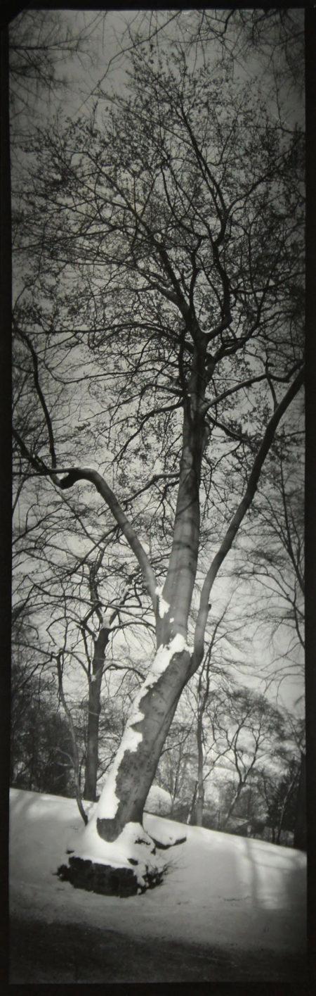 Panorama of Tree, n.d., gelatin silver print, 401 x 149 mm ©Josef Sudek