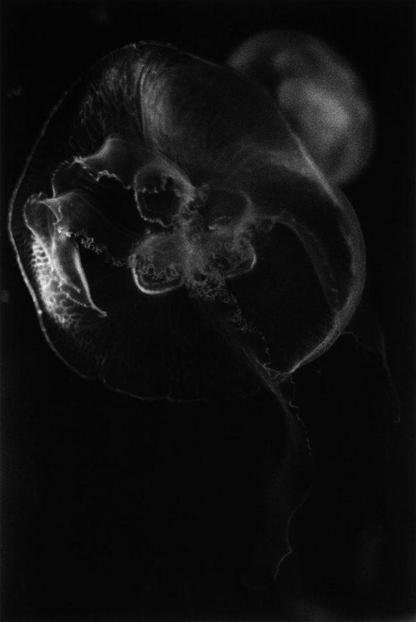 みずくらげ 江ノ島 神奈川 1991, gelatin silver print : 2002, 20 x 24 in, ©Kikuji Kawada