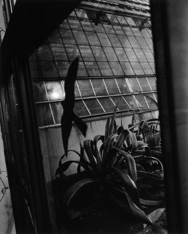 温室 1994, gelatin silver print : 2002, 20 x 24 in, ©Kikuji Kawada