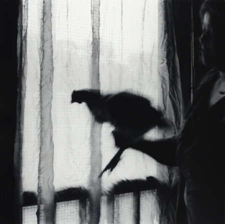 Chicken in front of Screen, 1986, gelatin silver print : 1990, edition of #1/25, 20x24 inches ©Debbie Fleming Caffery