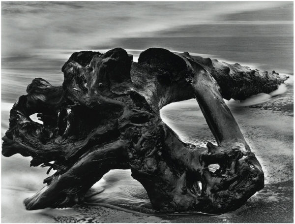 Driftwood Tree Trunk  1951, gelatin silver print, 7 1/2 x 9 1/2 in, ©Bullock Family Photography LLC