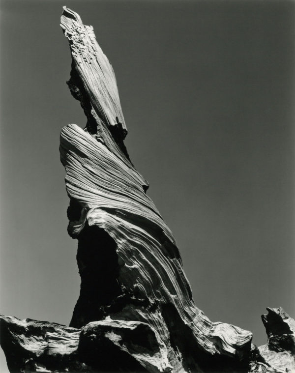 Drift Stump, Crescent Beach, 1937, gelatin silver print by Cole Weston in 1970s - 1980, 7 1/2 x 9 1/2 in, ©1981 Center for Creative Photography, Arizona Board of Regents