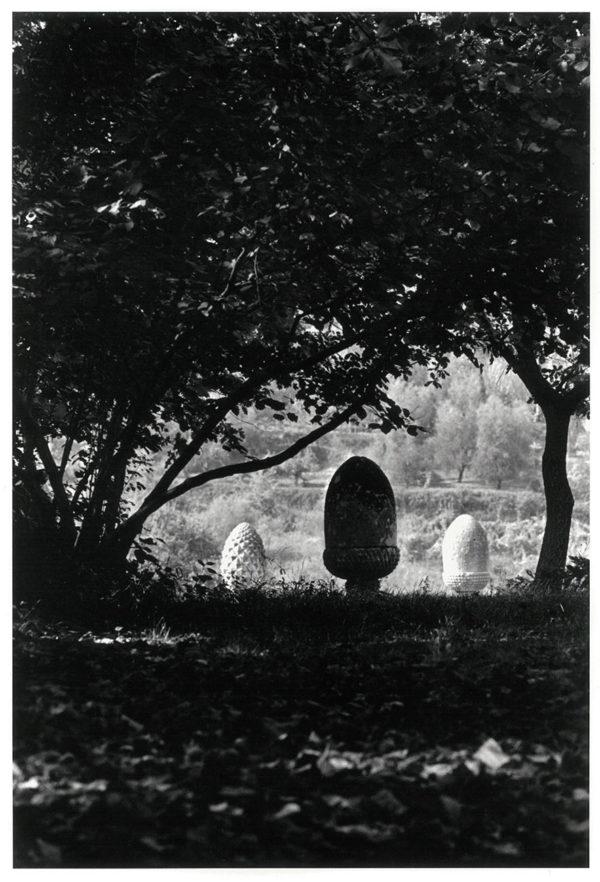 松毬とドングリ ヴィテルボ イタリア 1966, Gelatin silver print : 1969, 301x203mm, ©Kikuji Kawada