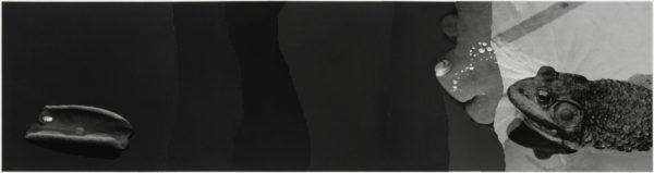 蛙  2007, Gelatin silver print on watercolor paper with glue, 254×730mm, limited edition #1/1 ©Yoshihiko Ito